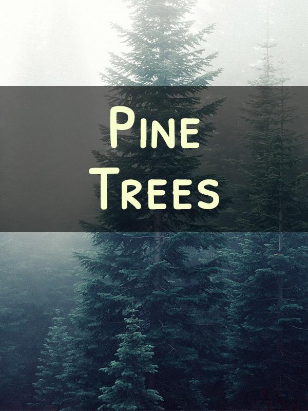 Miniature Pine Trees